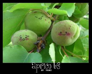 Apricots: Concept by Cait
