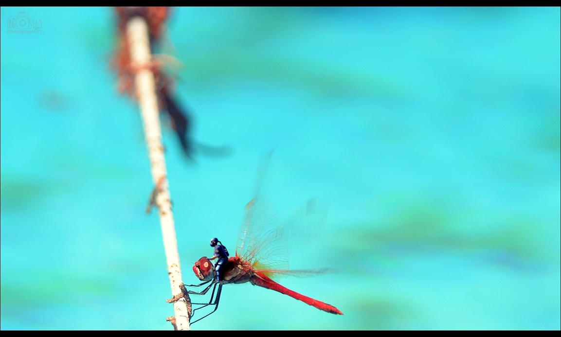 Dragonfly ride.. by HugoVlad