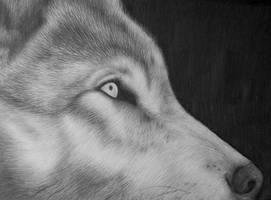 Wolf by silhoveete