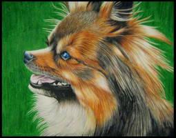 Dog by silhoveete