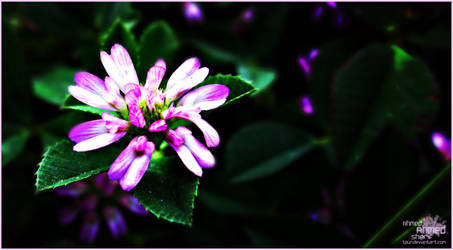 Into the purple