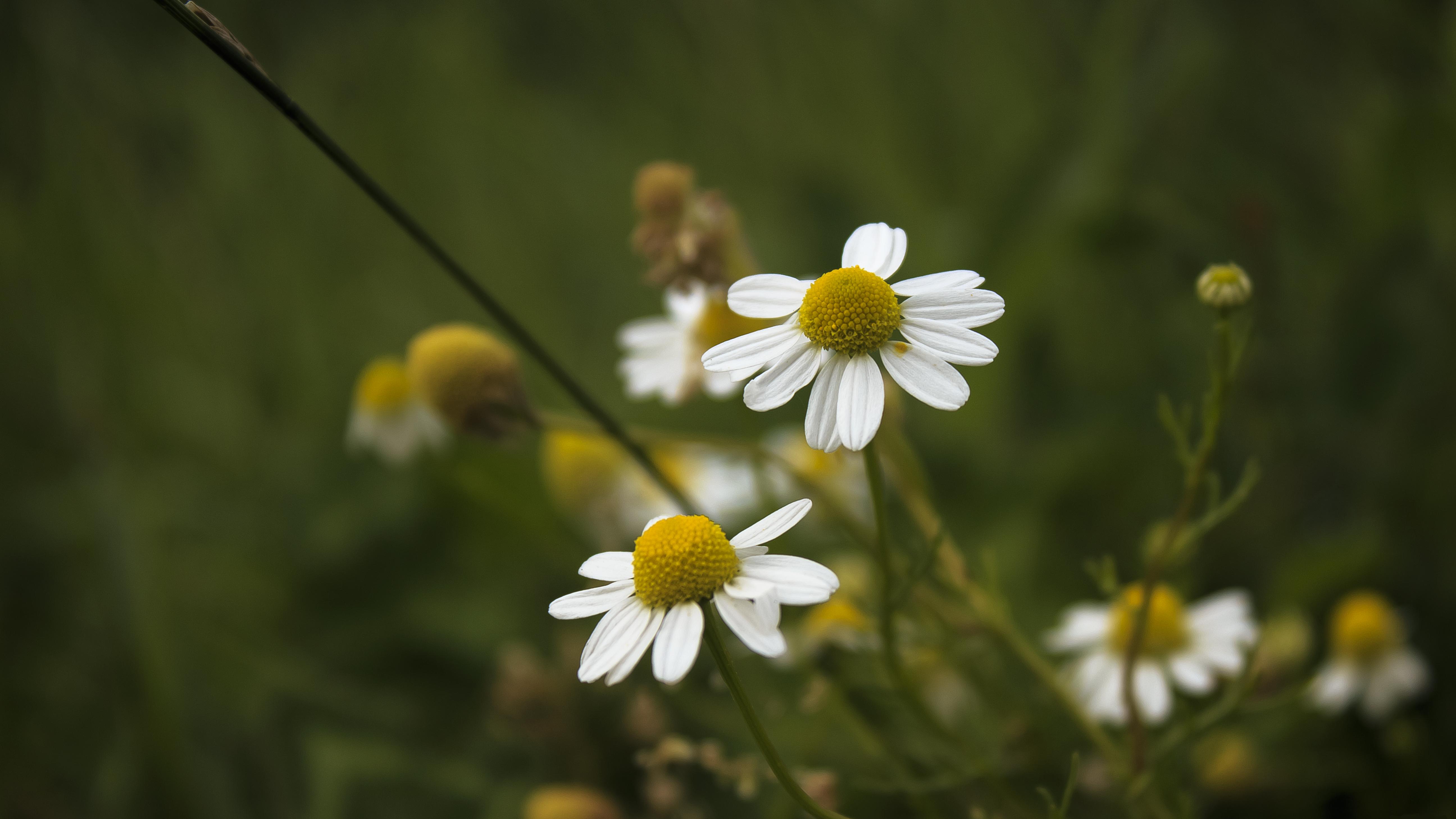 White little Flowers by Danimatie on DeviantArt