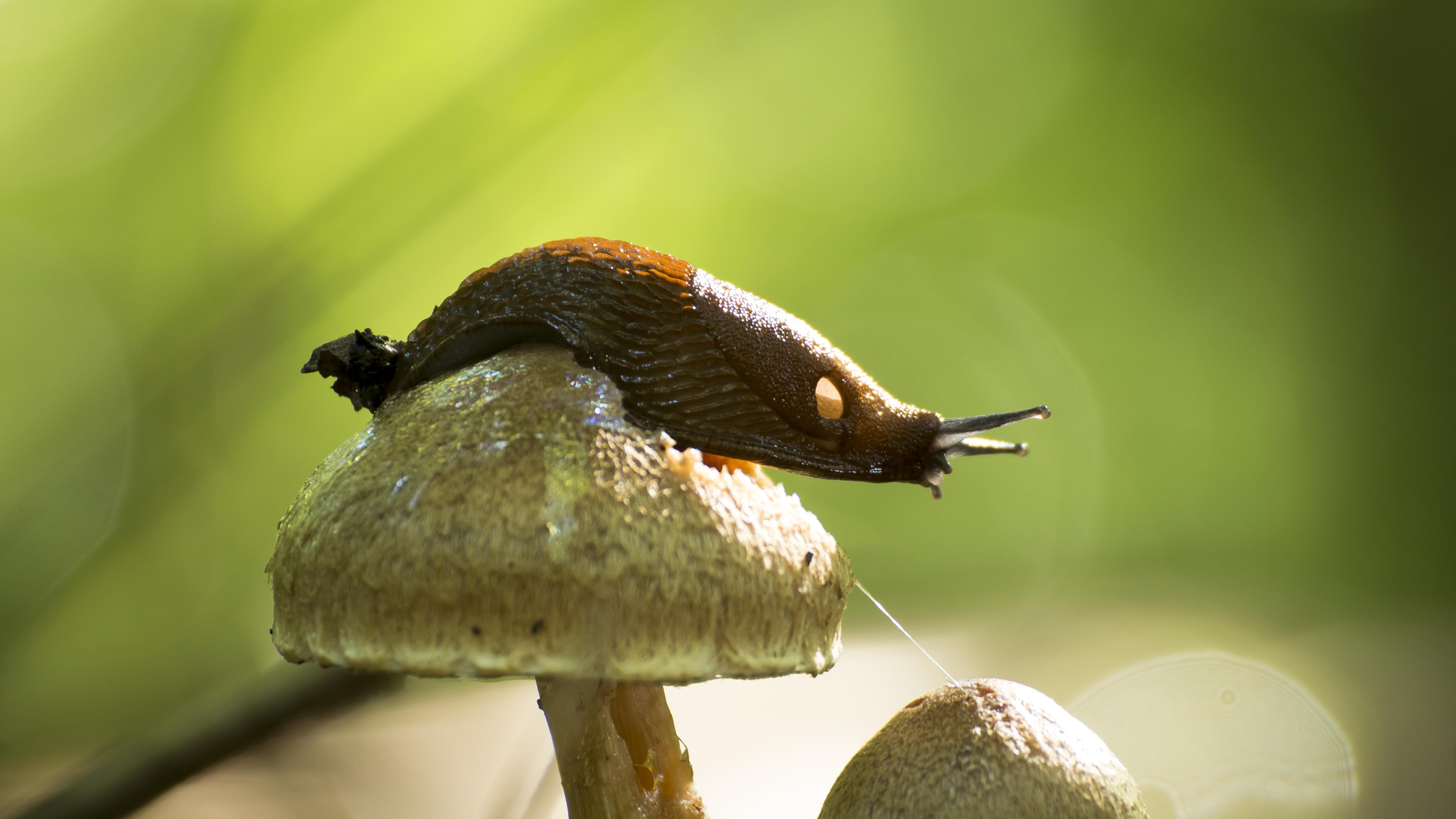 Slug climbing Mushroom by Danimatie
