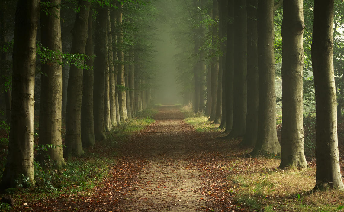 foggy forest by a - photo #24