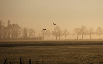 Flying Ducks over a Meadow in the early Morning by Danimatie