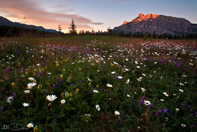 Wildflower Morn by Dani-Lefrancois