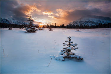 Morning Star by Dani-Lefrancois