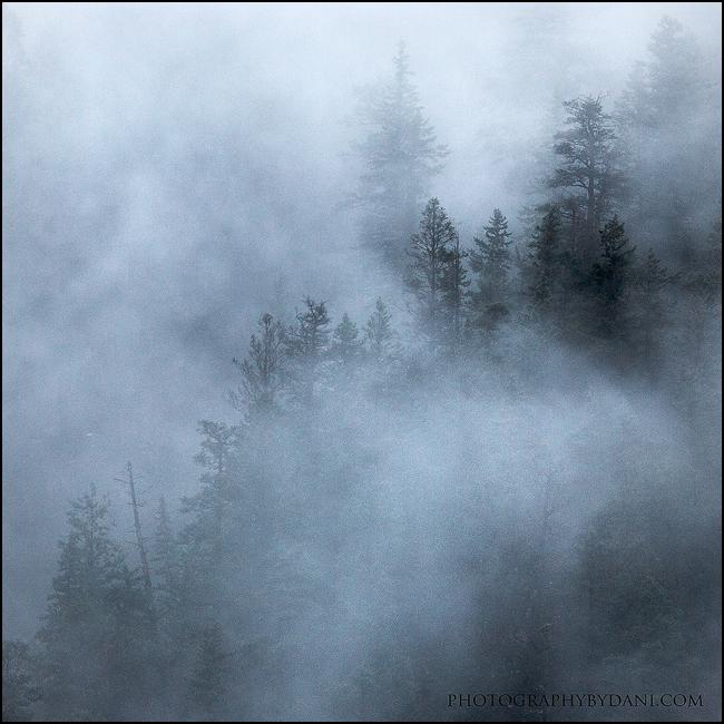 Yoho Mist by Dani-Lefrancois