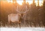 Frozen Stare by Dani-Lefrancois
