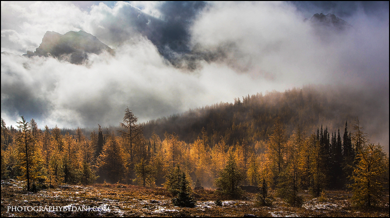 Valley Of Larches by Dani-Lefrancois