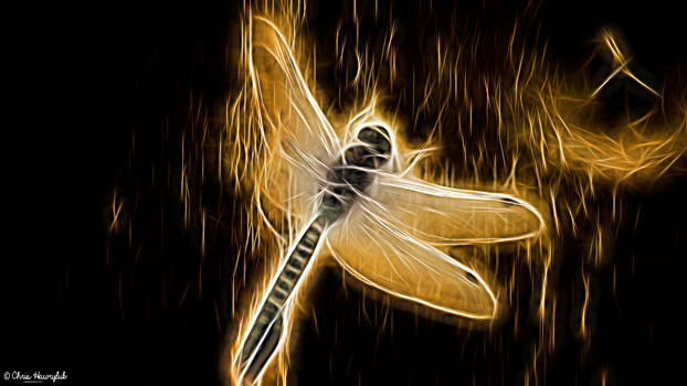 Neon Golden Dragonfly