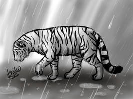 Rain hides tears