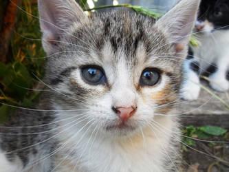 Little kitty by Lylenn