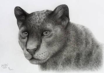 Black panther by Lylenn