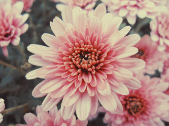 Flower by Lylenn