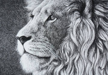 Pride by Lylenn