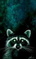 Scary racoon