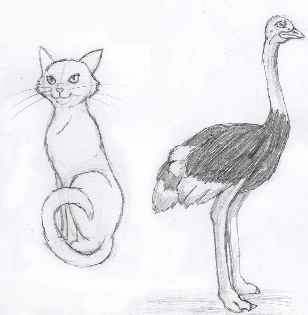my cat ostrich zoo animals by chlorofilla on deviantart