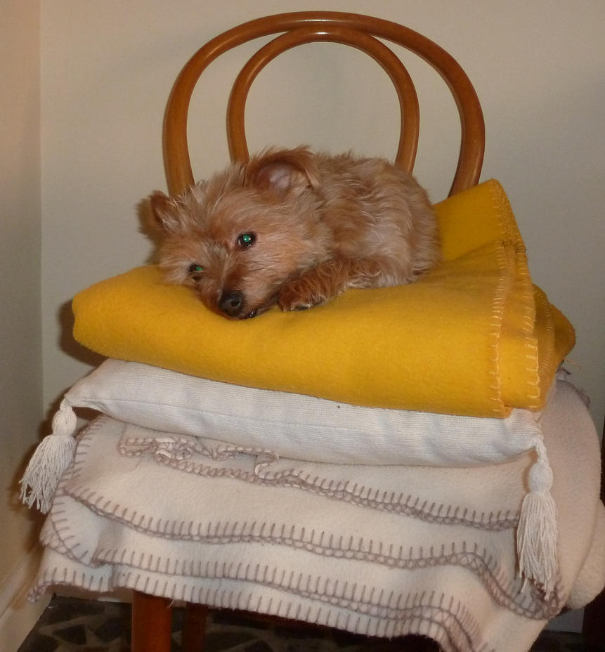 The Princess and the Pea by aldwarke