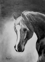 Arab horse by KristiT