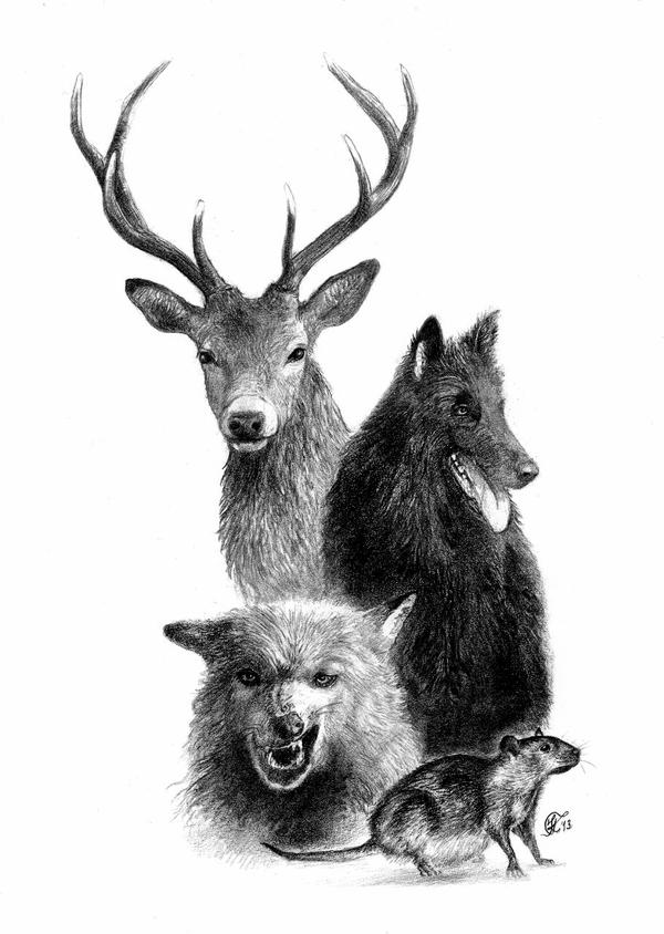 Messrs. Moony, Wormtail, Padfoot, and Prongs by KristiT on ...