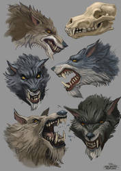 Wolfstudy 15 01 15 by Andy-Butnariu