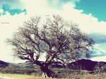 Tree 20/70