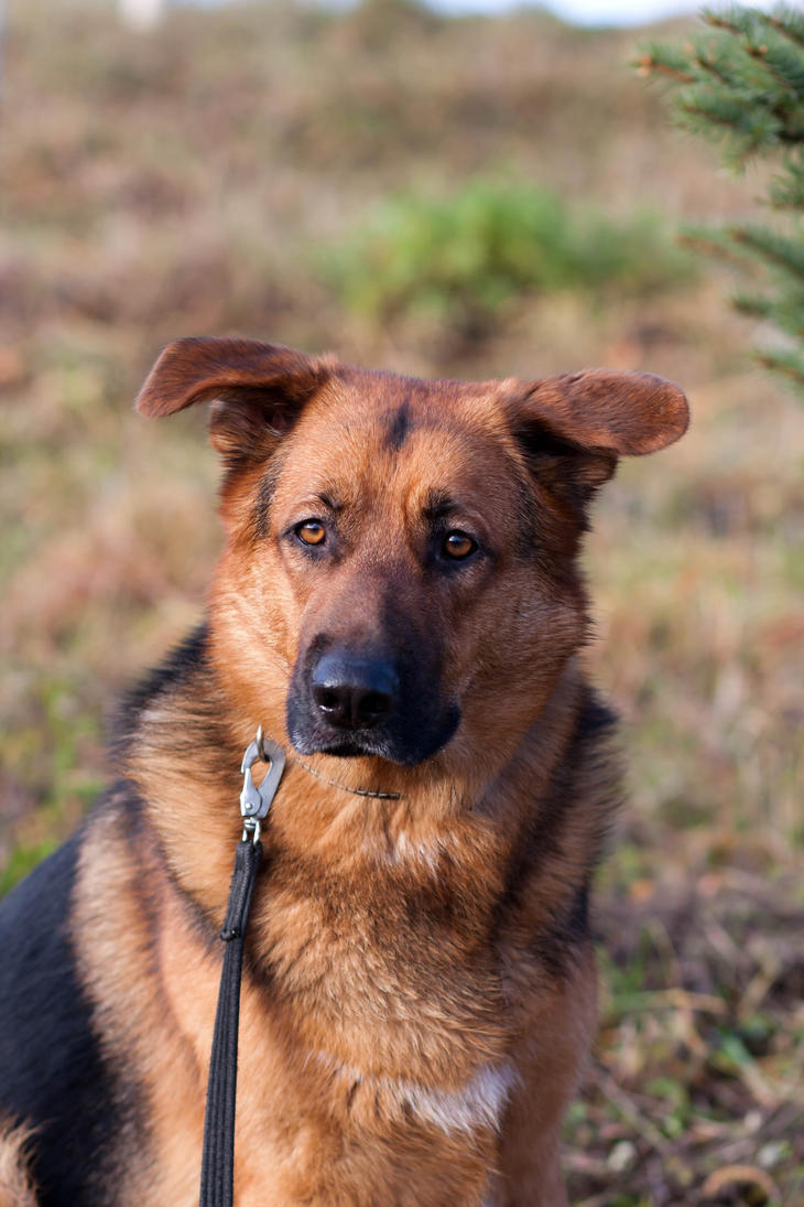 Dog 106 by BIREL