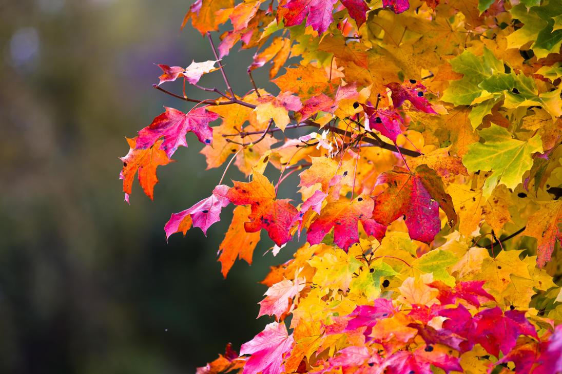 Leaf by BIREL