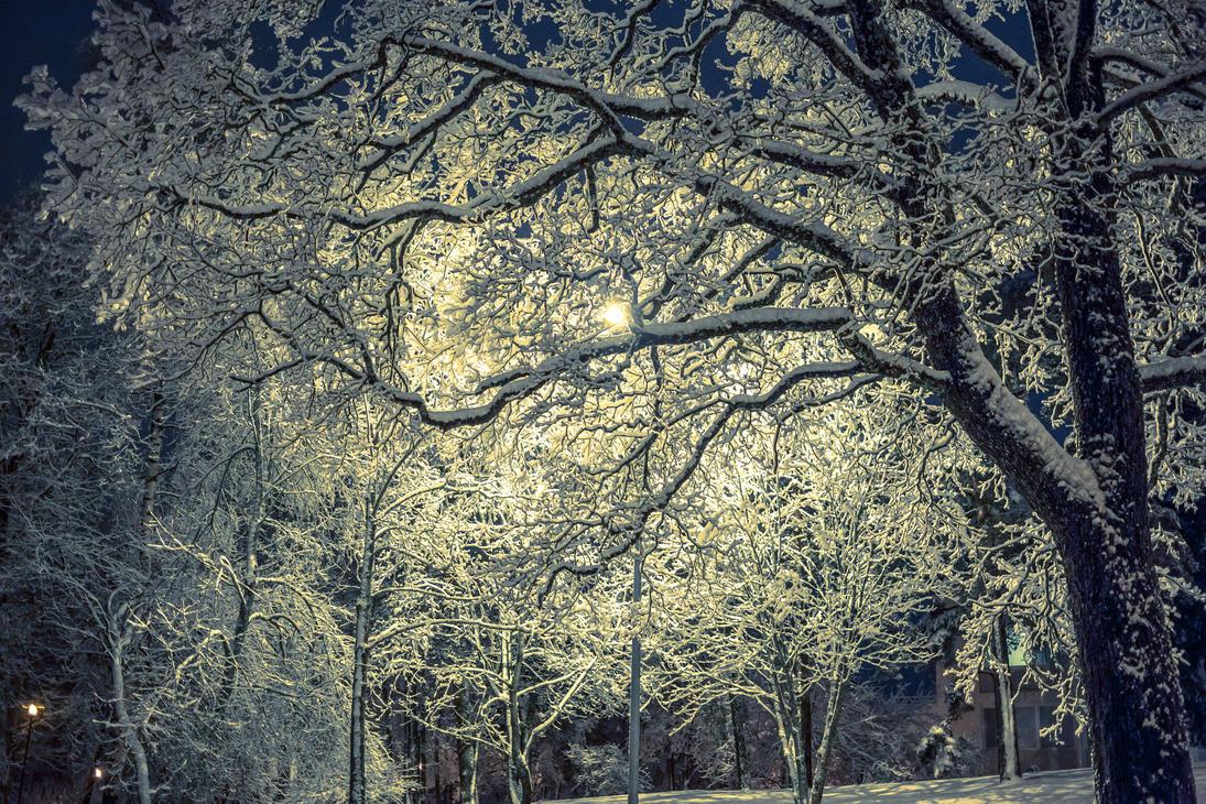 Winter tree by BIREL
