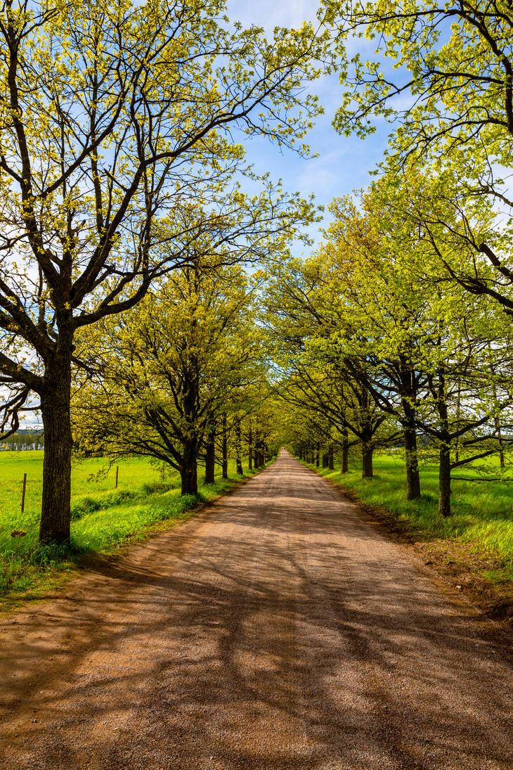 A spring village road by BIREL