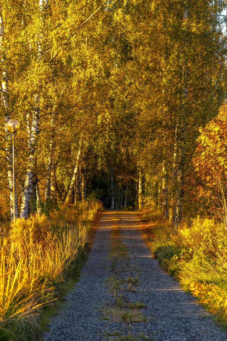 Autumn morning by BIREL