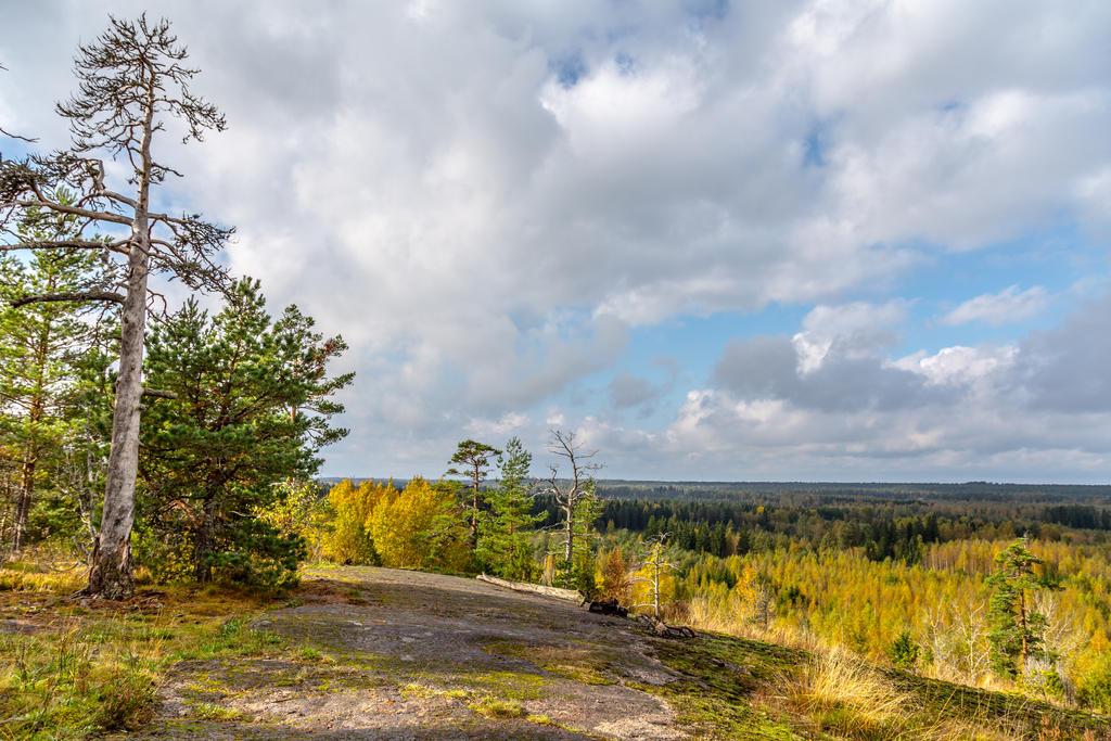 Autumn Landscape by BIREL