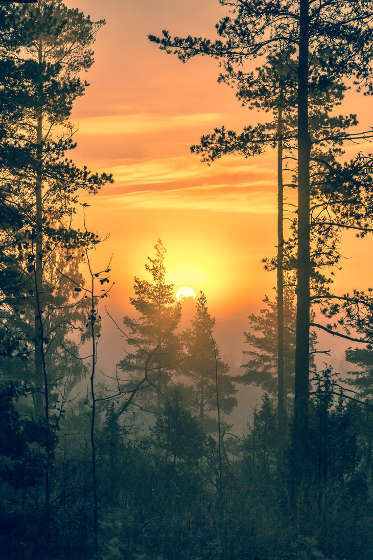 Sunrise and mist by BIREL