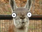 alarm a llama by the-O