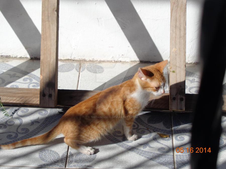 Un gatito de dos meses by 1987arevalo