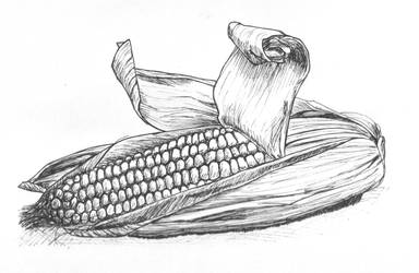 Corn Cob by starpoi