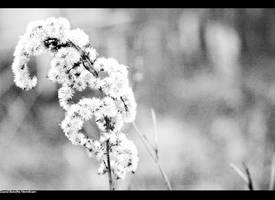 Lonly Flower but still proud by Thekapow