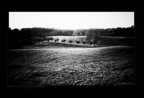 Waving Fields by Thekapow