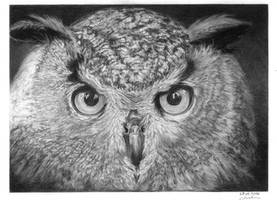 Owl by GiovanniChis
