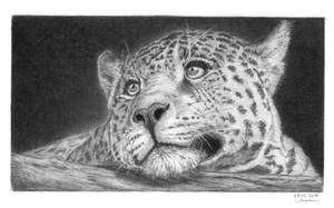 Leopard by GiovanniChis