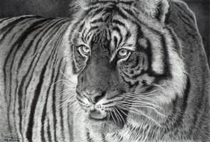 Tiger Portrait by GiovanniChis