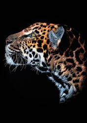 Focused Leopard by GiovanniChis