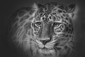 Leopard Portrait by GiovanniChis
