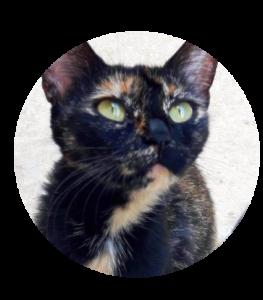 StormofRiverclan's Profile Picture