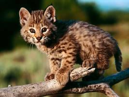 awwww kitten by Kexykarl