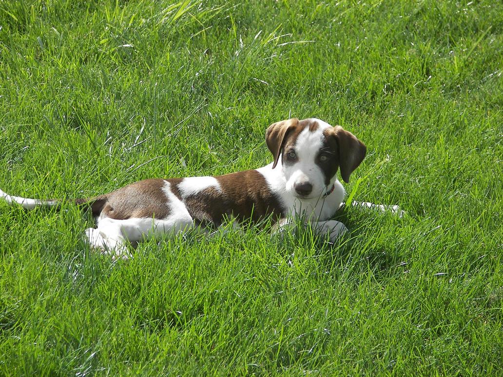 Puppy Love Dog Coat Uk
