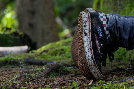 Shoes in the Forest