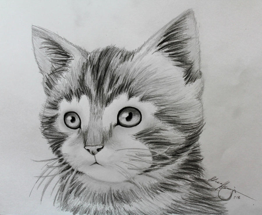Animal Drawing - The Kitten by LucaHennig on DeviantArt