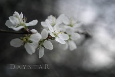 Silent by Daystar-Art